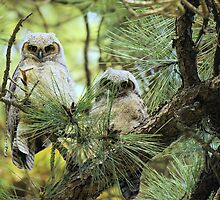 Baby Owls by jgreaves