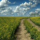Canola Road by Keri Harrish