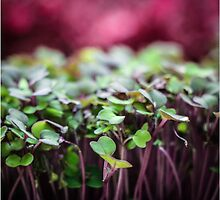 Colorful Sprouts by Nicole Petegorsky