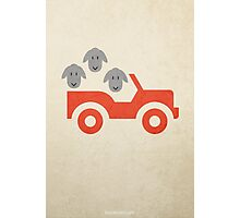 Sheep in a Jeep w/o Title Photographic Print