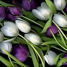 Tulip Medley by Scanart