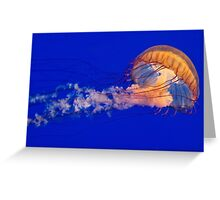Sea Nettles Jellyfish (Chrysaora fuscescens) Greeting Card