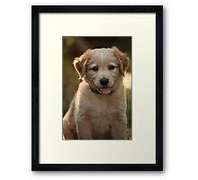Sparky - two months old Framed Print