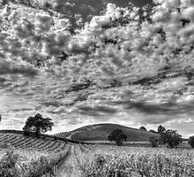 Sonoma Skies by Mike Stone