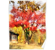 Red Autumn Sycamore Poster