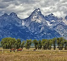 Teton Mountains and Horses by Matt Suess