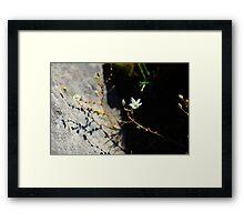 Burren Flower on the Shore Framed Print