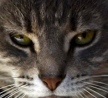Kitty Cat by LoshaPho