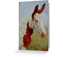 Pretty Baby-Paint Foal Portrait Greeting Card