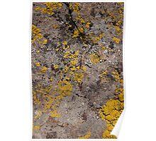 Yellow Moss Poster