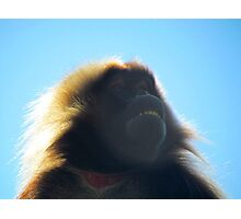 Baboon Photographic Print
