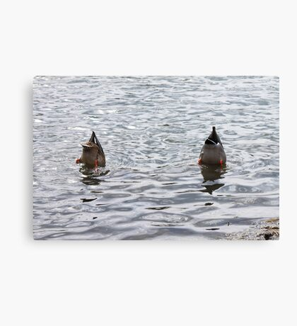 Synchronized Swimming Canvas Print