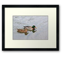 An After Meal Swim Framed Print
