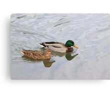 An After Meal Swim Canvas Print