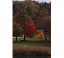 Fall Reds Photographic Print