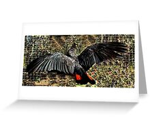 """Nova"" Red tail Male  Greeting Card"