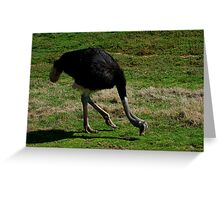 Ostrich - Shall We Dance? Greeting Card
