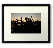 Foliage in a Sunset Framed Print