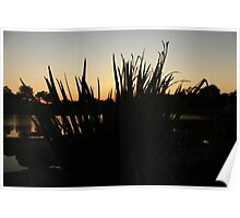 Foliage in a Sunset Poster