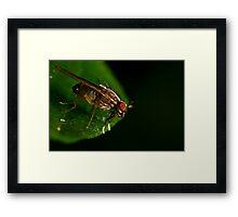 Fly On A Leaf #3 Framed Print