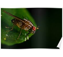 Fly On A Leaf #3 Poster