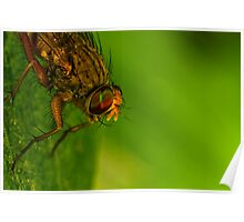 Fly On A Leaf #4 Poster