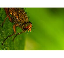 Fly On A Leaf #4 Photographic Print
