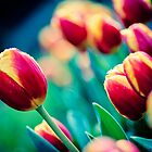 Flowerscapes - Tulip by lesslinear