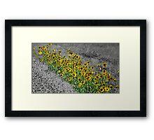 Yellow Streak Framed Print