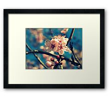 Blue Sky and Spring Blossoms Framed Print