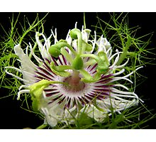 Passiflora Photographic Print
