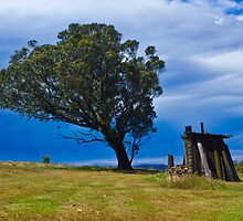 A tree and a Shack by Dean Cunningham