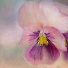 precious pansies by Teresa Pople