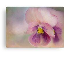 precious pansies Canvas Print