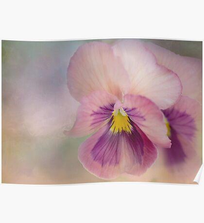 precious pansies Poster