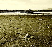 Hexagon in mud by Duncan Cunningham