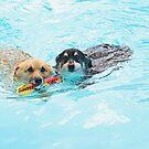 Swim !! by Renee Blake