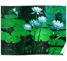 Blue Water Lilies Poster