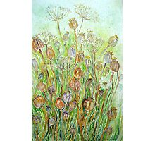 Poppy Seedheads Photographic Print