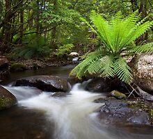 Rubicon River by Travis Easton