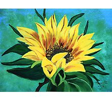 Sunflower looking up Photographic Print