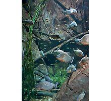 Peachy Piranhas  Photographic Print