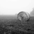 Hayfields of Arkansas by Trippydesigns