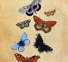 Butterflies by Claire Dimond