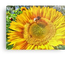 Bumble Bee And Sunflower Metal Print