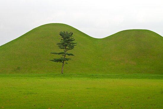 Hill tombs and tree, Korea by Gabor Pozsgai