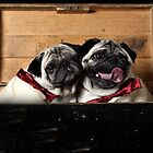 Pugs in a Box by brijo