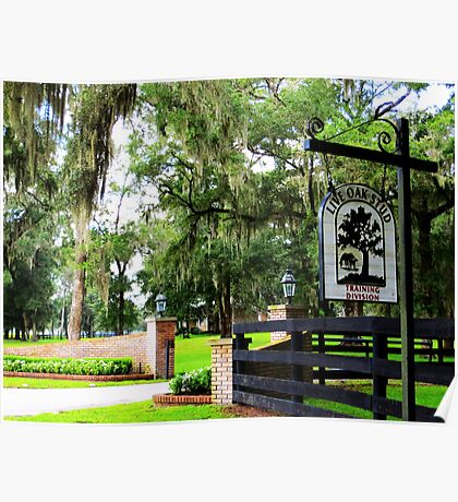 Live Oak Stud ~ Horse and Cattle Farm Poster