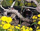 Wood Ducks by Dennis Cheeseman