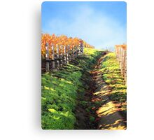Late Autumn View of Napa Valley 3 Canvas Print